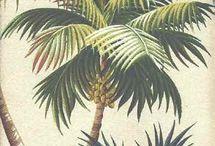 Palms / by Fera Jewellery
