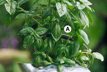 herb gardens / by Debbie Grant