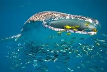 ocean creatures / by Cindy Stock