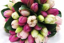 Tulips / by Aronia C.