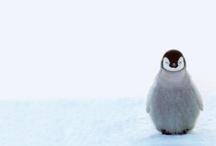 Penguins / by WallCandy® Arts