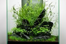 "Aquascape / These are ""PINS"" reflecting personal interest. I don't claim copyright or ownership of any content on this board.  I make every effort to give proper credit whenever possible.  / by Stephanus Mardianto"