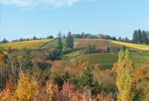 Wine country  / by Michele Eickman