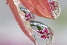 WATER DROPS!!!....❤ / GOTAS DE AGUA.....❤ / by Ivette Cruz