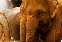 Sri Lanka Tourism Packages / by Sanjana Sanju