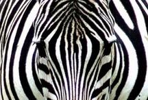 Simple As Black & White Stripes 2 / by Terri Altherr