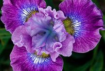 Flowers / by Micki Westhorp