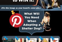 What an Adopted Shelter Dog Needs / Nutrish is holding a Pinterest contest where one winner will receive a year's worth of dog food. That is the equivalent of two 14 lbs bags of food each and every month for 12 months!  / by Kimberly Gauthier, Keep the Tail Wagging