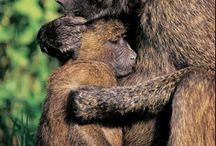 Mother Love / by Judee Light