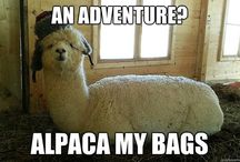 Animal Memes/Funny Animals / Animals are hilarious. / by Emily L. Sergo