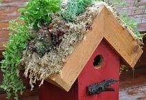Birdhouses / by Tammie Spain