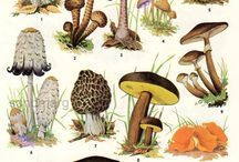 Foraging Fungi and Weeds,even Trees!! / Living off the land..nature at it's best!!! / by Leslie