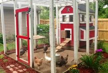Chicken Coops / by Patti McNabb