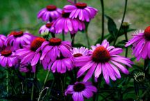 In the Garden / Gardening tips and gardens that inspire / by Janaki Rao (Home From India)