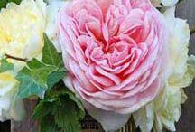 Just Flowers / by Debbie Simko