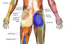 Anatomy / by Patricia Wissar