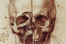 skulls and such / by Christine Yepsen