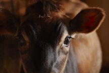 Animals / by Christy Davis