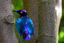 birds / by Viviana Salgado
