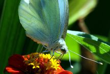 Butterflies / by Linda Bayarena