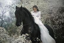 wedding / by amanda carroll