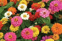 Flowers / by Backyard Gardener