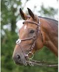 Horses / by Diane Elhard