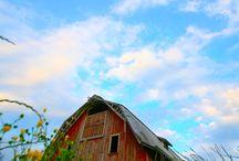 ~ Old Barns & Houses Love ~ / by Misty Dennie