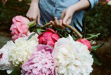 Gardening / by Jennifer Rollender