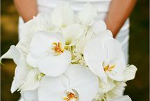 I'll Wear White... / by Kayla Wegley