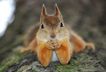 Nuts about Squirrels~ / by Hannah Pirone- Spaulding