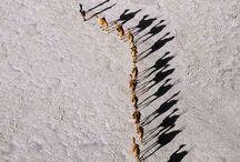 In line / by Anna Scott
