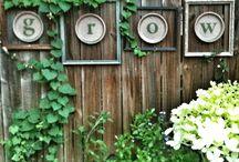 backyard / by Abigail Becker