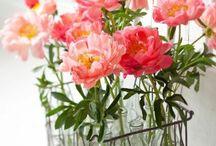 flowers / by Olivia Lyon