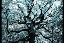 Trees / by Michelle de Villiers Art and Stories