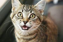 More pet stuff - cats / by Cheri Foley