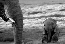 Elephants / by Lisa Cheng