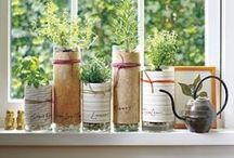 growing things {garden~herbs~what~have~you} / by Sarah Towne