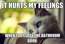 Cat Problems / by Kayla Kierst