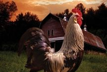 Roosters / by Charla Wescott