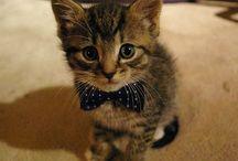 Cute / by Hollie Williamson