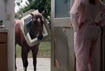 I love horses! / by Robin Hinman