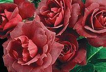Flowers / by Candie Vaughan