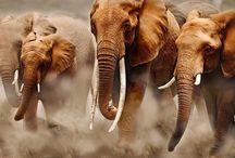 elephant love / by Tamariske Meaker