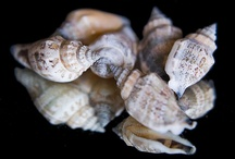 Shells and gifts from the sea / by Kirsten Parris