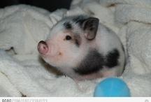 Cute Animals! :) / by Robyn Brewer