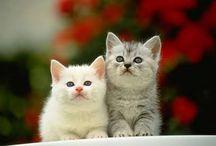cat lover / by Doaa Shendi