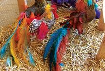 chickens / by Savannah Hale