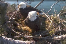 Live NestCams - All a MUST WATCH! / by Hyde Park Feed & Country Store