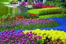 Gardens / by Joyce Spivey